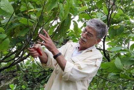 Cacau são tomense promove sucesso de chocolates Corallo