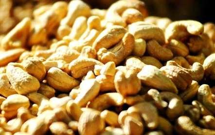Sofala exporta castanha de caju para a Ásia