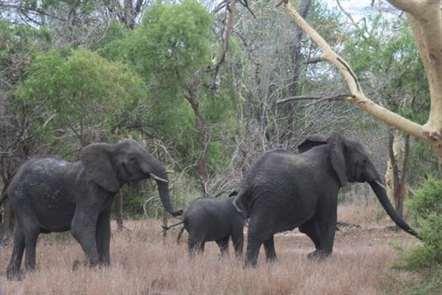 Parque Nacional do Zinave recebe 18 elefantes