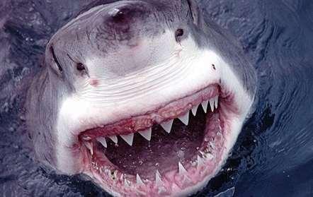 Pescador morto por tubarão na Baía de Inhambane