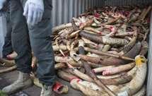 Autoridades apreendem terceiro carregamento ilegal de marfim num mês