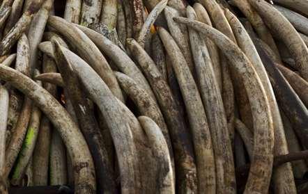 Detidos 60 caçadores furtivos no Limpopo em 2015