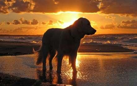 Primeira praia para cães do país abre a 6 de agosto