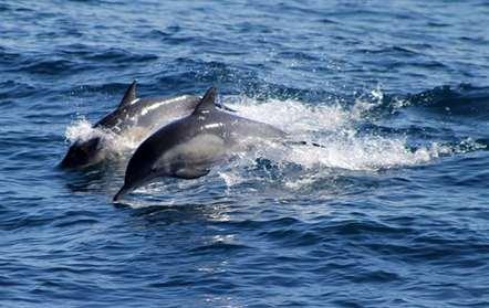 Cinco golfinhos deram à costa sem vida