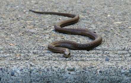 Cimetox contabilizou milhares de mordeduras de serpentes em cinco anos