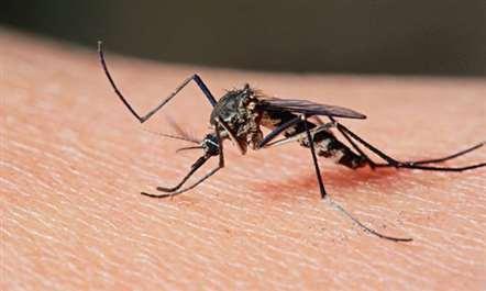 Casos de Zika diminuem no arquipélago