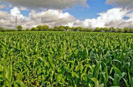 Agricultores e empresa chinesa assinam acordo para modernizar agricultura no país
