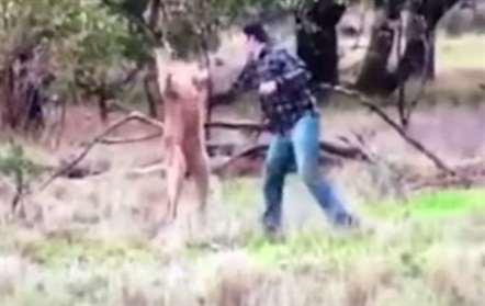 Homem agride canguru para salvar cão (vídeo)