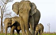 (Foto elephant-family.org)