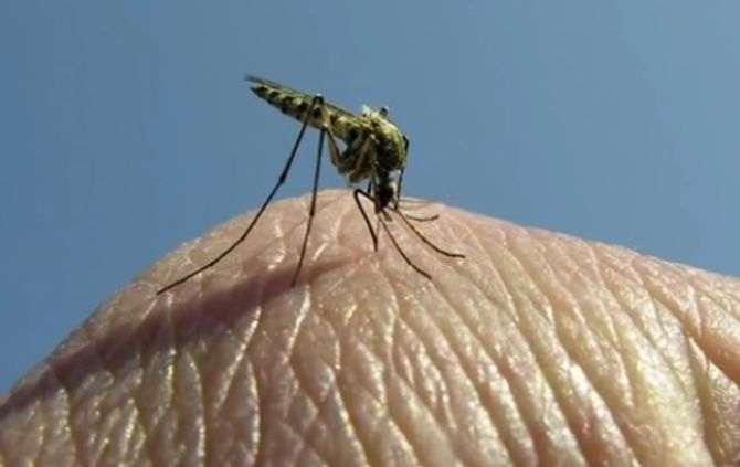 O PNUD pretende acabar com a mal�ria em S�o Tom� e Pr�ncipe
