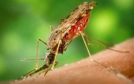 Mortes por malária aumentam nos primeiros seis meses do ano em Matala