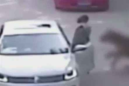 Tigre mata mulher em parque selvagem (vídeo)
