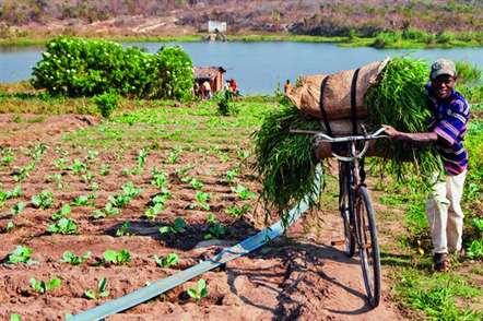 FAO lança sistema de `voucher´ electrónico em duas províncias