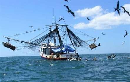 Quinze mil pescadores beneficiam do projeto de pesca continental